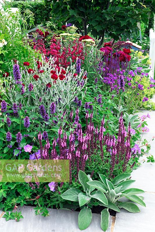 Red, blue and purple planting - Just Retirement Garden, RHS Hampton Court Palace Flower show 2015