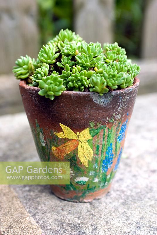 Succulent in old decorated clay pot