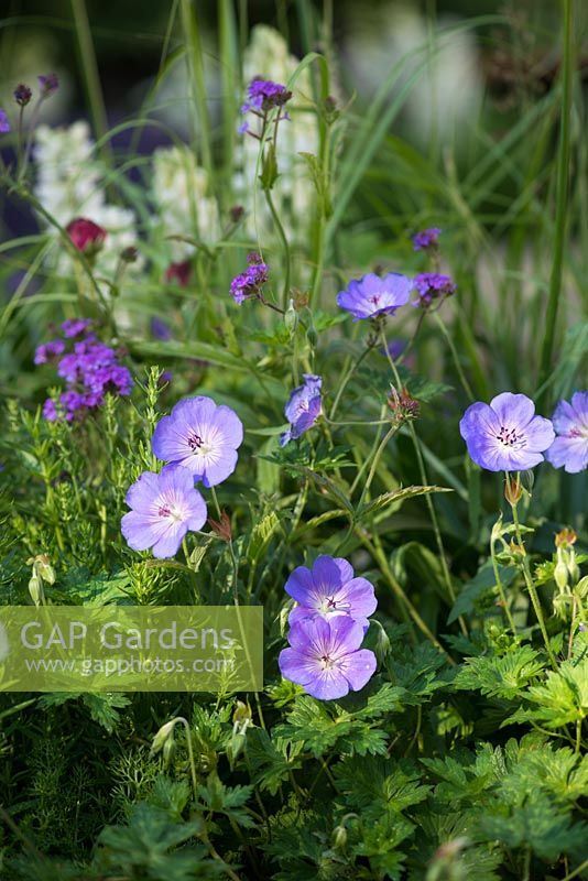 Gap Photos Specialising In Garden And Plant Photography