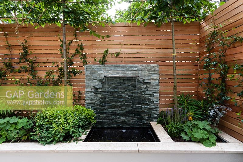 Red Cedar Wall Screen, Slate Water Feature. Pittosporum Tobira Nanu,  Trachelopermum Jasminoides,