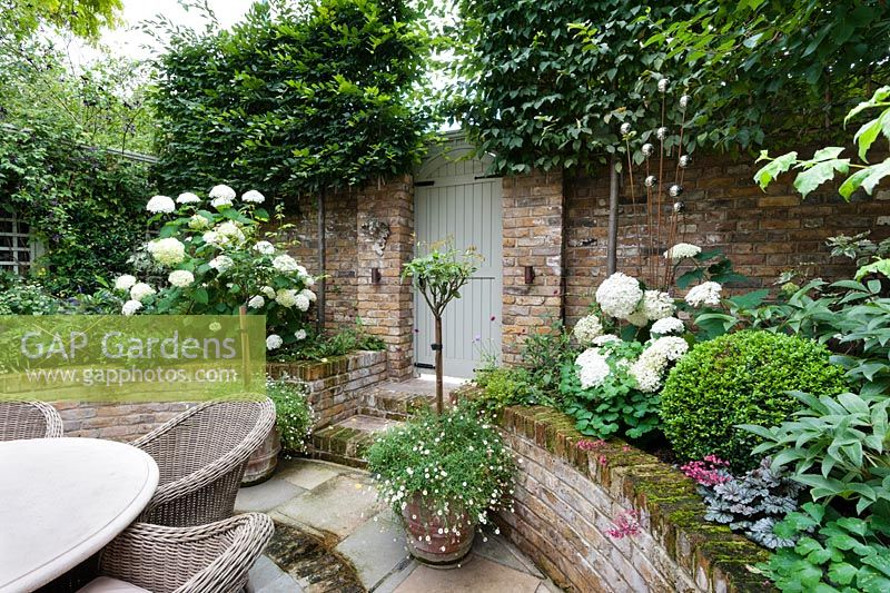 View of garden gate from sunken brick and tile patio. Carpinus betulus, Hydrangea arborescens 'Annabelle', Erigeron karvinskiansus, Buxus sempervivens, July.