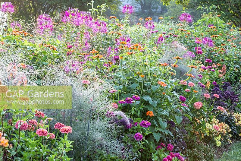 Mixed border with annual planting at the Weihenstephan Trial Garden. Planting contains: Pennisetum villosum, Tithonia rotundifolia, Zinnia elegans, Foeniculum vulgare 'Rubrum', Cleome spinosa