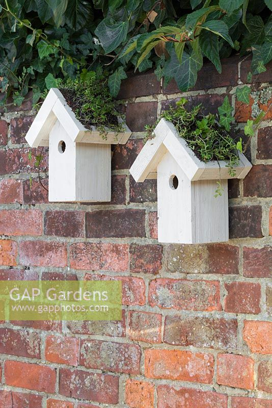 Twin bird houses with green living roofs consisting of Sedum matting