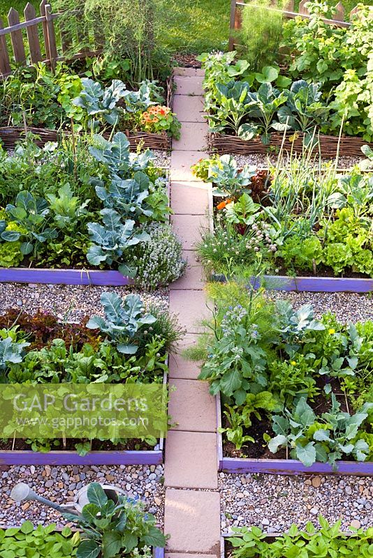 Raised beds in vegetable garden with gravel paths and paving.