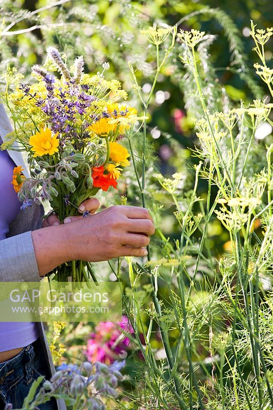 Woman picking edible and herb flowers: marigold, fennel, borago, mint, nasturtium.