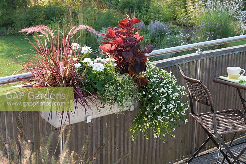 gap gardens planter fixed to balcony with plants including pennisetum setaceum 39 fireworks. Black Bedroom Furniture Sets. Home Design Ideas
