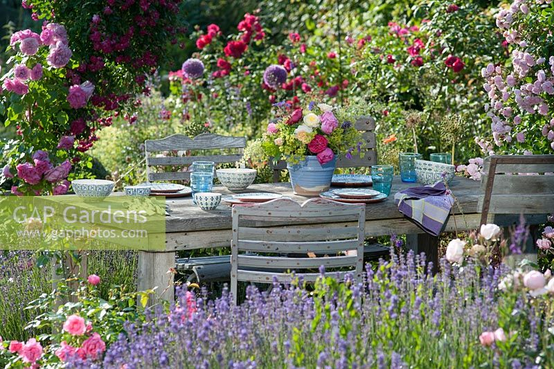 Laid table between beds of lavender -Lavandula and Rosa - Rose. Arrangement of roses and lady's mantle