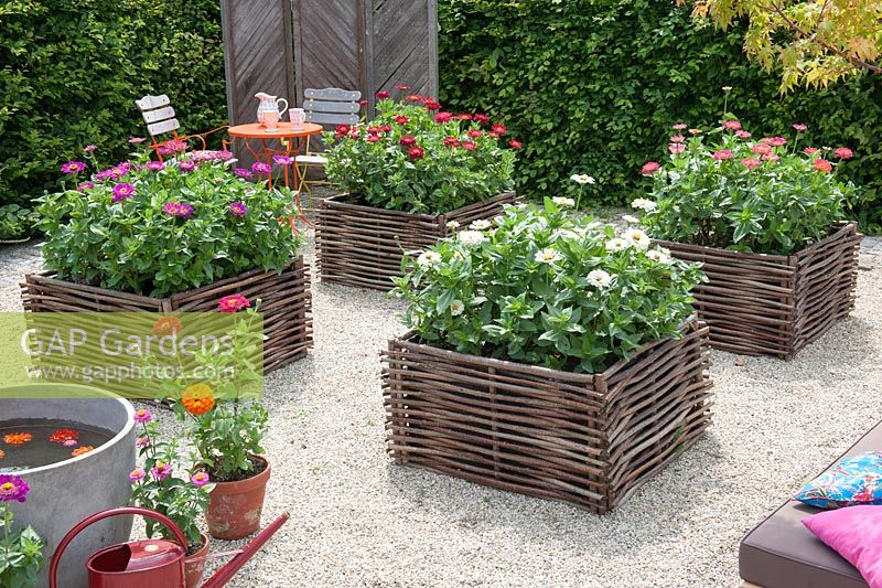 Gravel terrace with raised beds made of hazelnut rods - Zinnia in square raised beds on gravel surface
