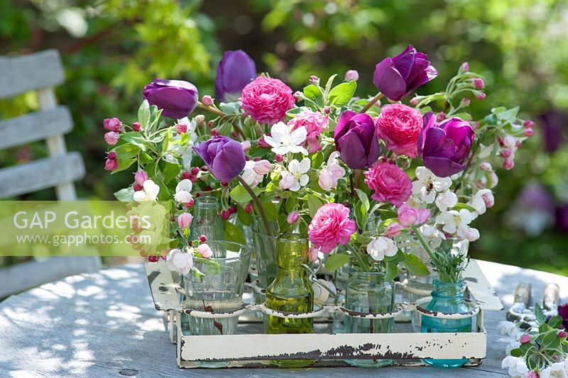 Cut spring flowers in jars and bottles in Tulipa, Ranunculus - buttercups and branches of Malus 'Evereste'