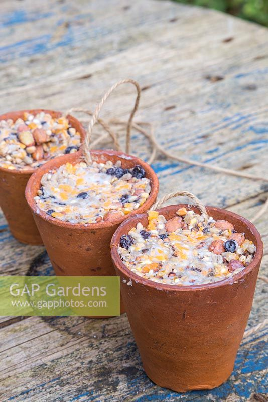 Terracotta pots filled with a mixture of Lard or Fat, Raisins, Bird seed, Cheese and Peanuts