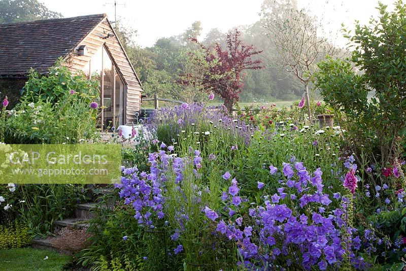 Artists Gallery overlooking summer planting in country garden including Campanula persicifolia, Digitalis, Rosa, Philadelphus, Allium. Bradness Gallery, East Sussex. Owners: Artists Michael Cruickshank and Emma Burnett