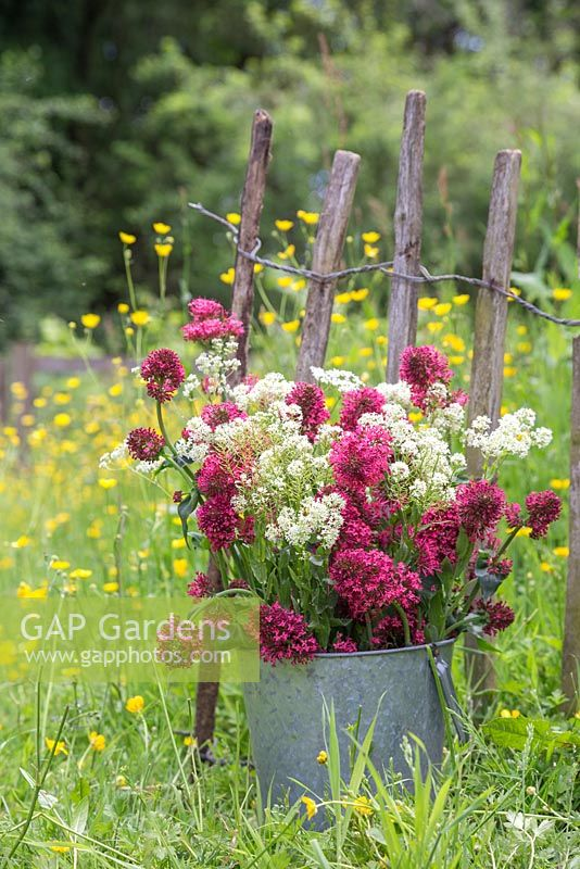 A bucket of wildflowers against a rustic fence, with a view to a meadow of Buttercups - Ranunculus