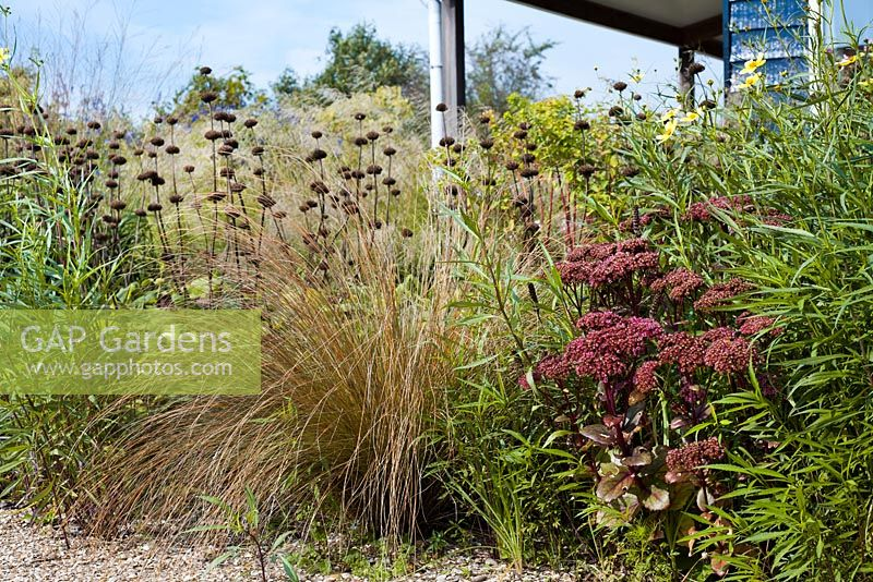 Autumn view with border of perennials and ornamental grasses surrounded the house. Bidens aurea Hannay's Lemon Drops, Phlomis russeliana, Chionochloa rubra, Sedum Matrona. Madelien van Hasselt.