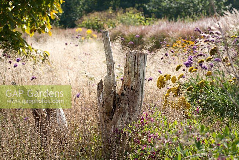 GAP Gardens Autumn view of perennial border Lespedeza formosa