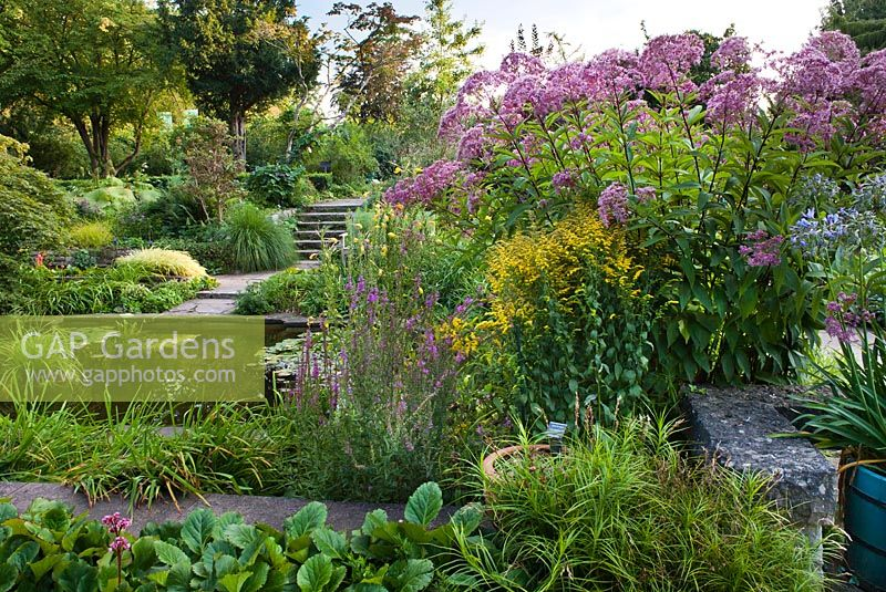 Late summer borders around the pond. Karl Foerster garden Postdam Eupatorium maculatum Glutbal