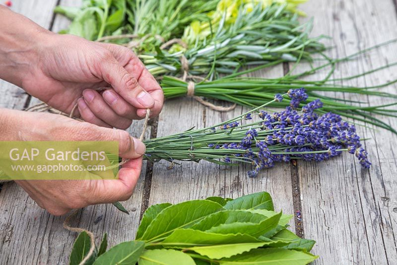 Preparing a selection of herbs ready for drying. Bay leaves, Lavender, Chives, Rosemary, Oregano