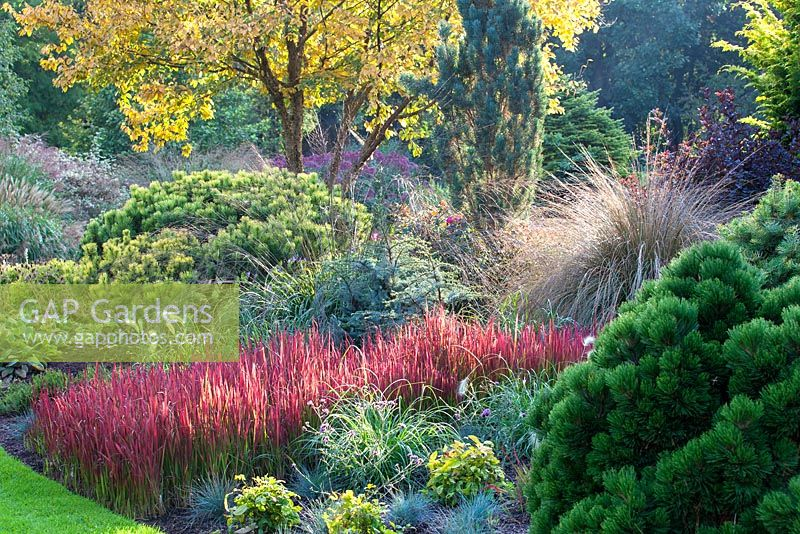 Colourful mixed planting with Imperata cylindrica Rubra in border at Foggy Bottom garden, Bressingham Gardens in Autumn.