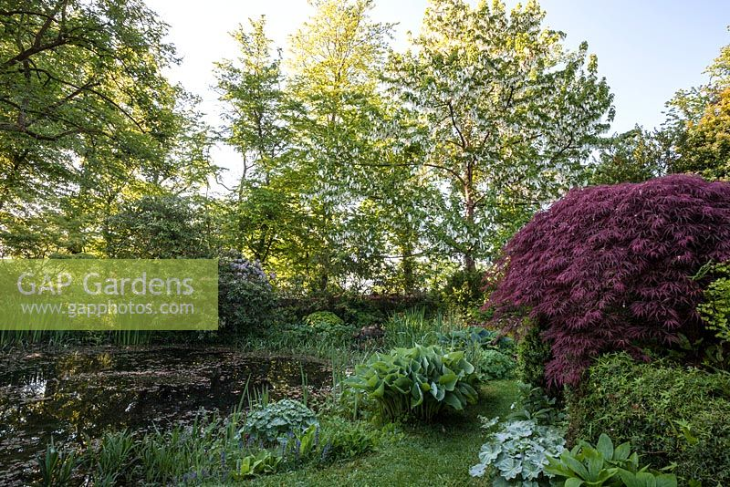 Gap Gardens Pond With Mixed Planting Featuring Hostas Ferns Acer