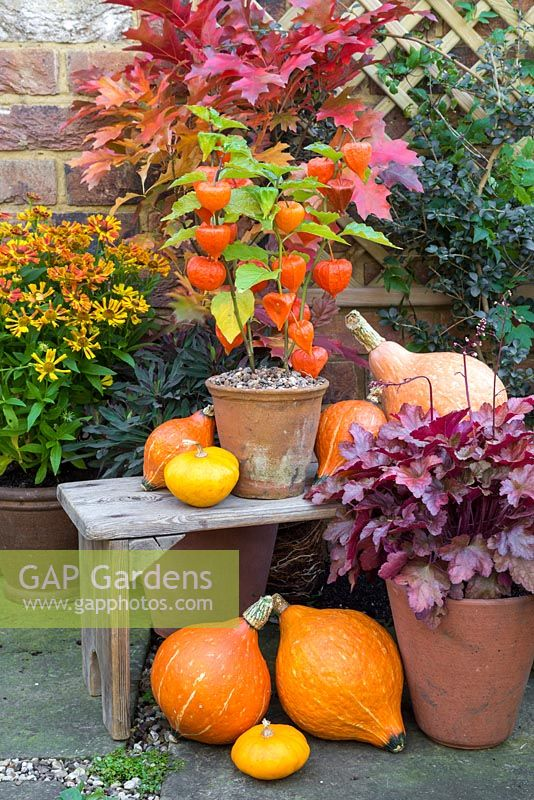 gap gardens autumnal display featuring physalis 39 chinese lampion 39 gourds heuchera and. Black Bedroom Furniture Sets. Home Design Ideas