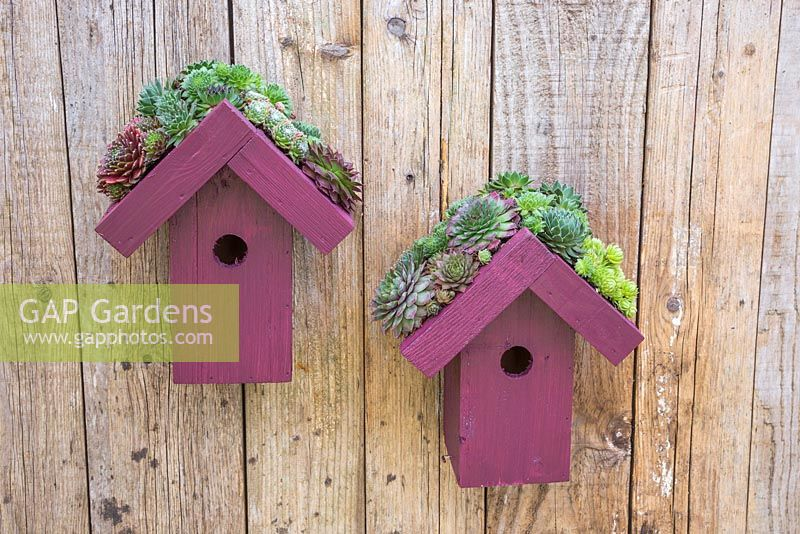Living roof bird houses planted with succulents hanging on a fence