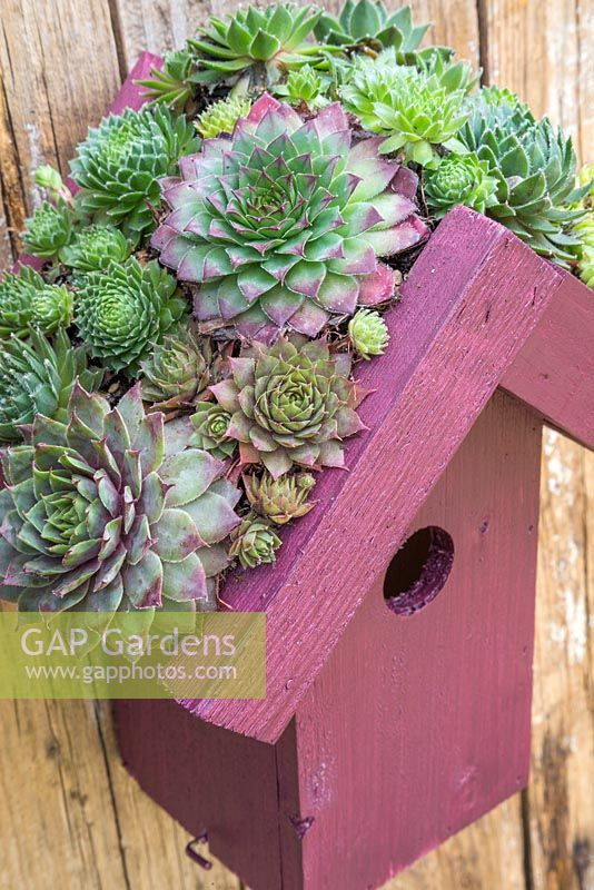 Living roof bird house planted with succulents hanging on a fence