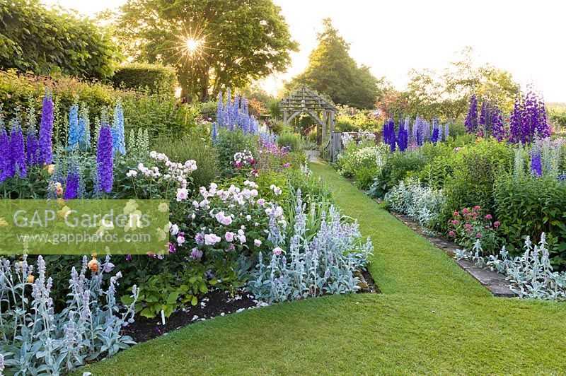 The early morning sun shines through a tree onto the Sundial Garden at Wollerton Old Hall Garden, Wollerton, Shropshire - featuring David Austin roses, Stachys, Delphiniums, Phlox paniculata, Salvia microphylla and Centranthus ruber, among a wide range of other herbaceous plants.