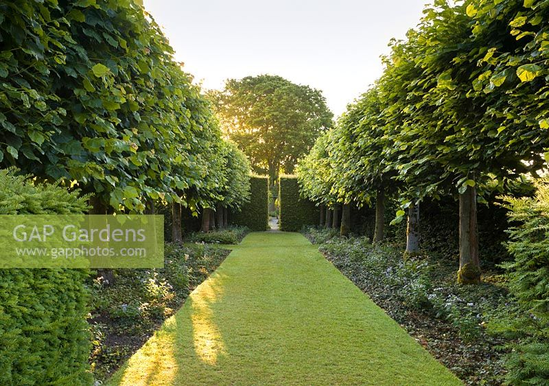 A view of the Lime Allee at Wollerton Old Hall Garden, Shropshire. Tilia platyphyllos 'Rubra'.