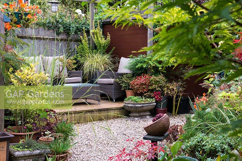 Tucked away in quiet corner at bottom of garden, between shed and greenhouse, a raised wooden deck with outdoor rattan furniture. Pots of acer, bonsai, heuchera and ornamental grasses. In tall pot Carex oshimensis 'Evergold' and berberis with nandina, mahonia and coleus.