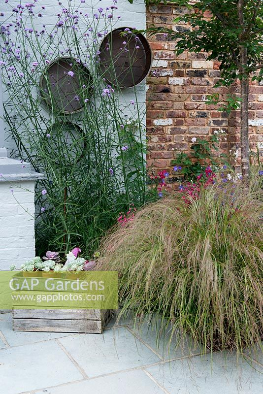 Old garden sieves are hung on the wall behind clump of Verbena bonariensis. On right, Stipa arundinacea and Penstemon 'Garnet'.