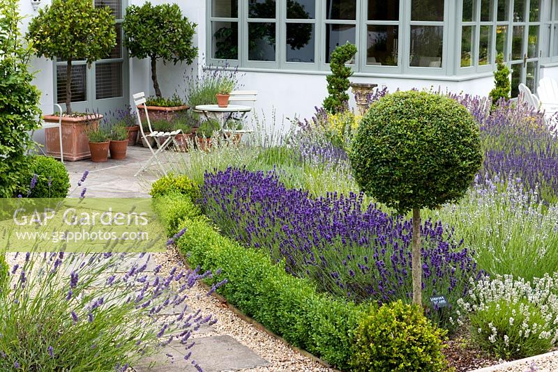 A path leads past box edged borders of lavender and privet standard, to patio seating area with bay trees and lavenders in pots.