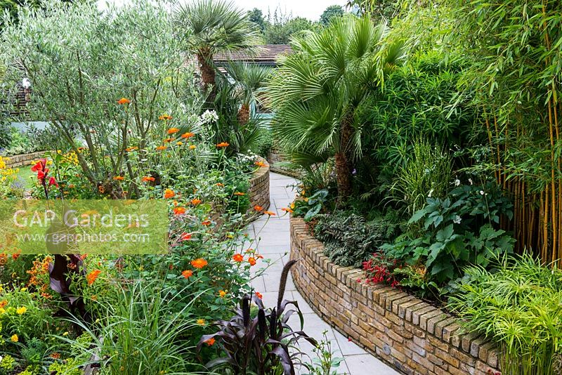 A curving stone path between raised brick borders planted with RH: golden bamboo, Chamaerops humilis. LH: Tithonia rotundifolia, olive tree and Canna 'Durban'.