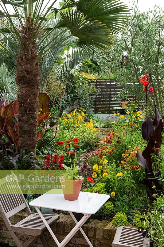 A tropical town garden with seating area surrounded by a hot border planted with coreopsis, canna, rudbeckia and zinnia under a Trachycarpus wagnerianus palm.