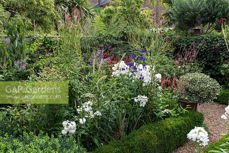 In 12m x 6m town garden, formal parterre with box and variegated holly standards, and box edged beds of Phlox paniculata 'David', Aconitum 'Spark's Variety', red Persicaria amplexicaulis 'Firetail', pennisetum and sanguisorbas.