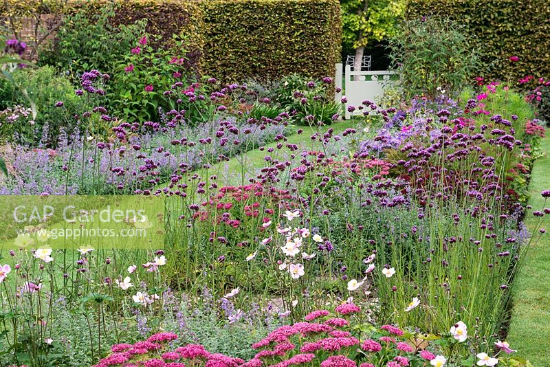 A grass path running between a pink and purple double border planted with Verbena bonariensis, Nepeta Six Hills Giant, Salvia bethellii, Sedum Autumn Joy, Buddleja and Cosmos Dazzler.