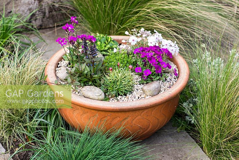 A miniature alpine garden with ajuga, arabis, mossy saxifrage, moss phlox and aubretia.