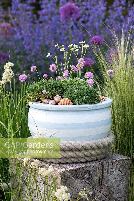 Terracotta pot painted in seaside themed colours. Planted with sea pinks and mossy saxifrage, and mulched with sea shells. Placed on oak cube, in contemporary setting of ornamental grasses.