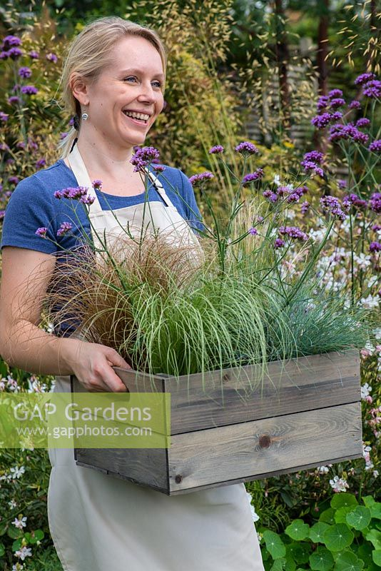 Step by step planting a drought tolerant box with Verbena bonariensis 'Lollipop' and ornamental grasses Carex 'Frosted Curls', Carex comans 'Bronze Form', Stipa tenuissima and Festuca glauca.