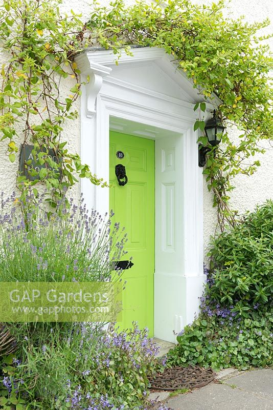 Lime Green Front Door With Lavender Campanula And Honeyle