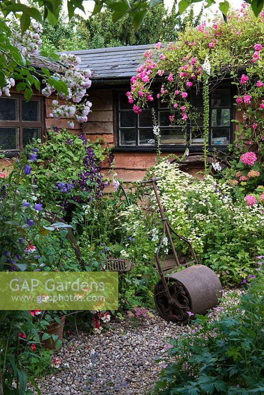 A cottage garden with cast iron roller by clump of white feverfew, in front of a wooden summerhouse covered with Rosa 'Dorothy Perkins' and Clematis 'Etoile Violette'.