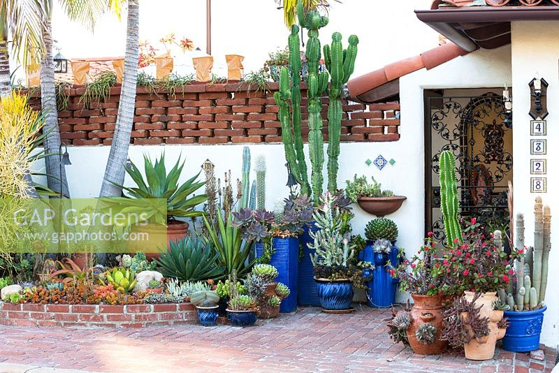 View of assorted succulents and cactus in containers at Jim Bishop's Garden. San Diego, California, USA. August.