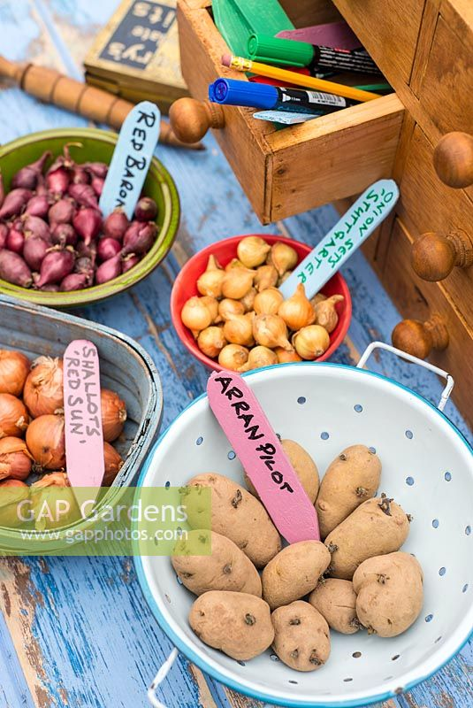 Shallots, Onion sets and seed potatoes, ready for planting in various containers with coloured homemade labels.