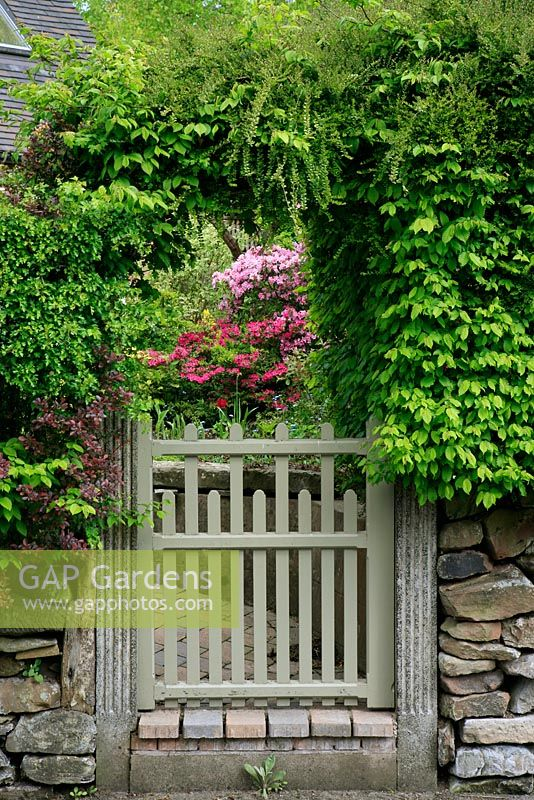 A mixed country - style hedge of hornbeam, Lonicera nitida, hawthorn and purple leaved Berberis has been trained to form an arch over a gate that frames a clump of Azaleas on the path to the front door.