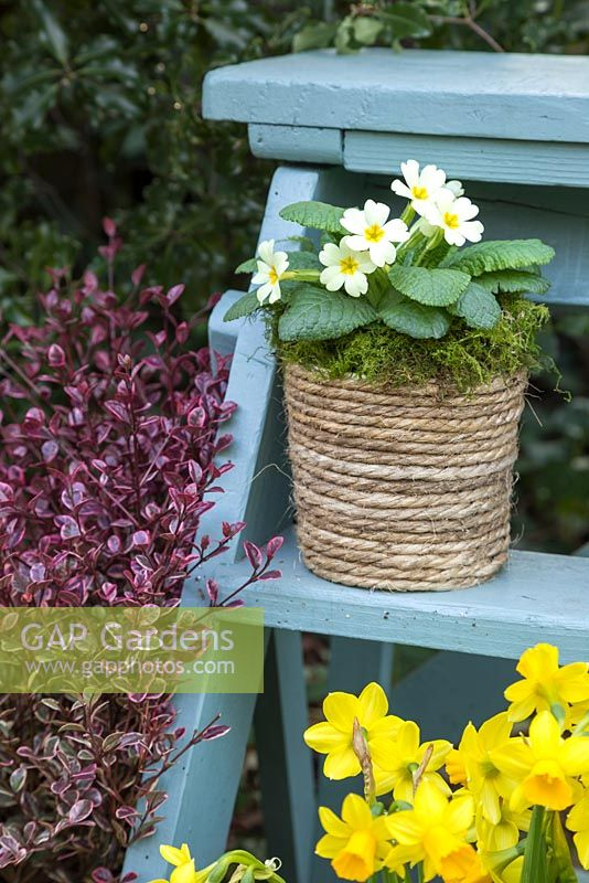 A plain pot revamped by applying decorative rope to the exterior. Potted with Primula vulgaris