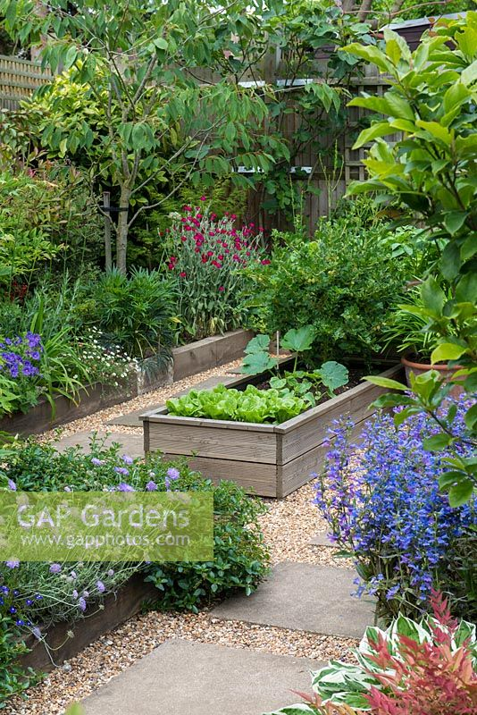 A raised area with slab and gravel paths between borders planted with  fruit and vegetables: lettuce, courgette and gooseberry and mixed borders: penstemon, scabious, dianthus and erigeron.