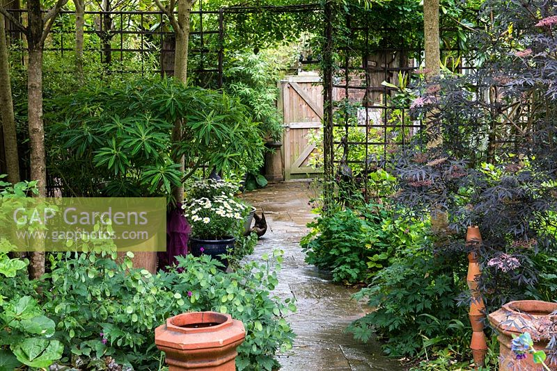 Landscaping With Trellis : Gap gardens a small town garden with metal trellis dividing the
