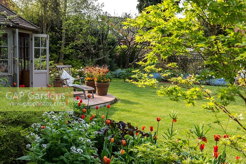 A view through an acer of a country garden in spring to a small wooden summerhouse and patio with hot mixed borders including Tulipa Brown Sugar, General de Wet and Orange Cassini. The large terracotta containers are planted with Tulipa Abu Hassan and Carex comans Bronze.