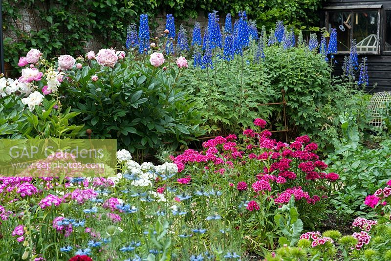 Cut flower garden, with delphiniums, peonies, sweet williams and nigella.
