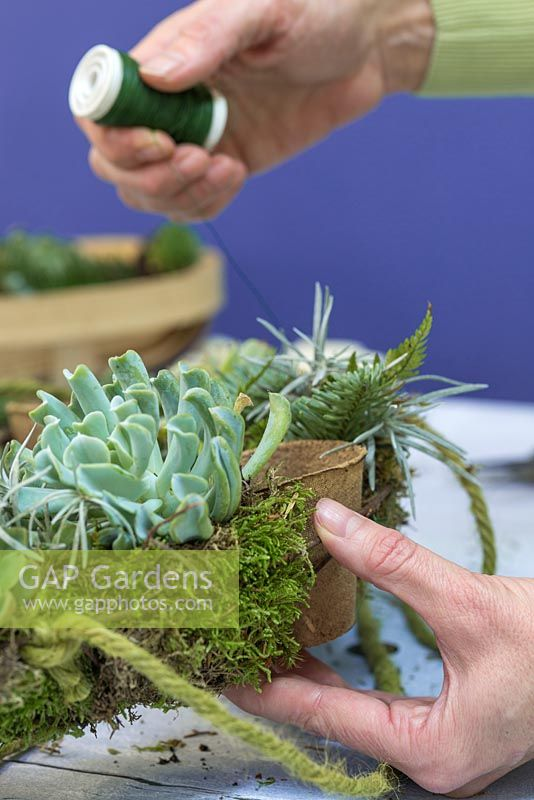 Use the florist wire to secure the Moss and Succulent planting to the wreath frame
