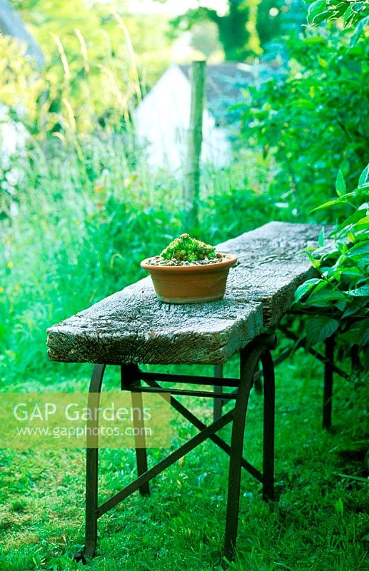Enjoyable Gap Gardens Succulents In Clay Pot On Rustic Wooden Bench Caraccident5 Cool Chair Designs And Ideas Caraccident5Info