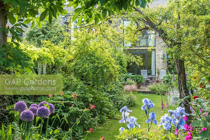 View of long, narrow, town garden in spring with informal lawn and mixed borders. Iris 'Jane Phillips', Allium 'Globemaster', Wisteria floribunda 'Alba', Centranthus ruber.